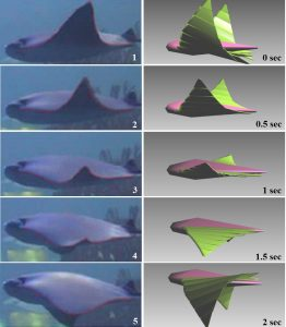 A bio-inspired swimming robot for marine aquaculture applications: From concept-design to simulation